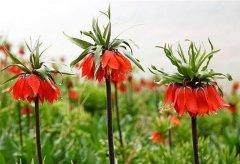 wild-tulip-gardens-3.jpg